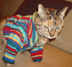Cats Craigslist Doescatscry Mainecooncats Angora Cats Siberian Cats For Sale Cat Sweaters