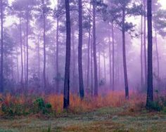 While on a trip to Charleston, South Carolina I found some time to hike through a pine forest on a foggy morning. I exposed Fujichrome at f32 @ ½ second.  Equipment: Tachihara 4x5 field view camera, Schneider 150mm f5.6, Bogen 3028 tripod, Pentax spotmeter.