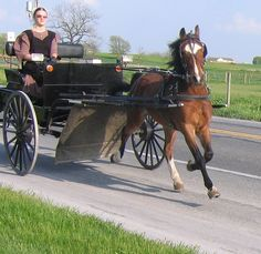 Amish buggy in Lancaster Pennsylvania