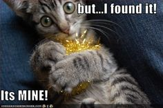 first law of kitten and toddlers    Google Afbeeldingen resultaat voor http://icanhascheezburger.files.wordpress.com/2009/07/funny-pictures-tinsel-belongs-to-cat.jpg