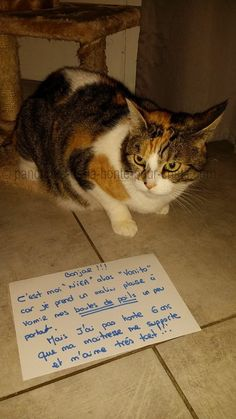 « Hello!!! I'm Niea, aka Vomito, because I take perverse pleasure in vomiting all my fur balls everywhere. But I'm not ashamed, 6 years my mistress supports me and loves me!! » #lolcats #shameyourpet #shameyourcat #cat #cats #chats