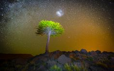 Araucaria by Francisco Negroni on 500px