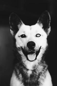 Handsome husky girl