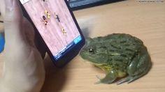 Bullfrog vs. #technology #CuteAnimals