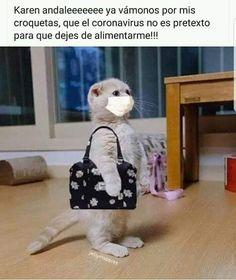 Funny Spanish Memes, Funny Animal Memes, Animal Quotes, Cute Funny Animals, Funny Cute, Hilarious, Memes Humor, Funny Memes, Memes Do Dia