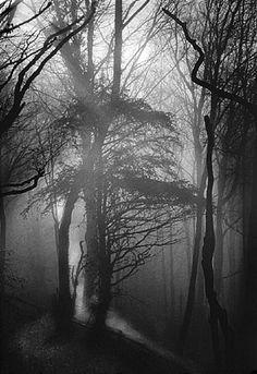 David Hurn, Tintern Forest, Wales, GB, 1963.