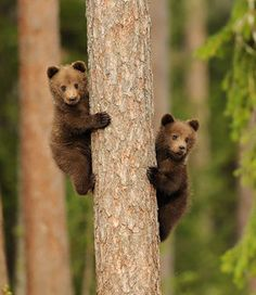 OK smarty pants, now what? Nature Animals, Animals And Pets, Beautiful Creatures, Animals Beautiful, Cute Baby Animals, Funny Animals, Ours Grizzly, Animal Original, Photo Animaliere