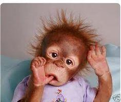 Image result for reborn monkey