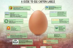 TakePart.com: Everything You Need to Know About Egg Labels - If you've been wondering what all those terms printed on egg cartons mean, this should clear things up.