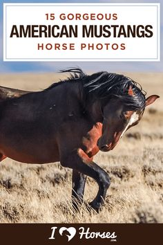 Beautiful horse photography of American mustangs Horse Photos, Horse Pictures, Dressage, Andalusian Horse, Friesian Horse, Arabian Horses, Palomino, Horse Pattern, Wild Mustangs