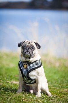 Utendørs portrettfotografering av hund ved Glengshølen i Sarpsborg. Tatt av hundefotograf Pål Hodne  #hundefotograf #hundeportrett #hund Studio, Fine Art, Dogs, Animals, Animales, Animaux, Pet Dogs, Studios, Doggies