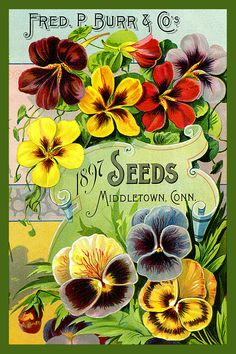 Fred Burr Seed Catalog cover 1897 in a set of 4-4x6 quilt blocks by American Quilt Blocks. Ferry Seed Packet 1889 in a set of 4-4x6 quilt blocks by American Quilt Blocks. Vintage image printed on cotton. Ready to sew.  Single 4x6 block $4.95. Set of 4 blocks with pattern $17.95.