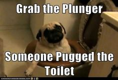 Funny Pugs Archives - Page 7 of 18 - Pug Meme, funny cute pugs Funny Dogs, Funny Animals, Cute Animals, Funny Memes, Animal Memes, Pug Meme, Pugs And Kisses, Pug Pictures, Dog Shaming