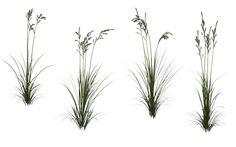 Grass 08 by wolverine041269 on DeviantArt