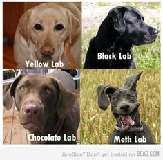 All kinds of labs.