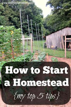 How to start a homestead.