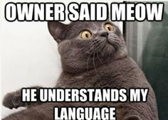 animal humor with captions   Animal captions... I meow at my cat occasionally to call her...... It works