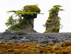 Weird Seaside Formations,Sitka, Alaska