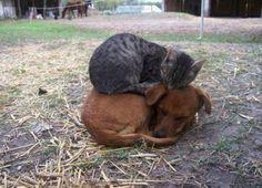 Cuddling is the best!