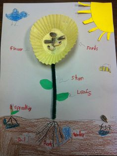 Cute activity for labeling parts of a plant. We did this but also used pipe cleaners for the stem and strings for the roots First Grade Science, Preschool Lessons, Science Classroom, Science Lessons, Science Education, Teaching Science, Kindergarten Activities, Science Activities, Science Projects
