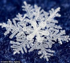 Cherepanov spends hours taking these incredible macro photographs of real snowflakes!Timofey Cherepanov spends hours taking these incredible macro photographs of real snowflakes! I Love Snow, I Love Winter, Winter Snow, Winter Time, Snow Scenes, Winter Scenes, Cool Pictures, Cool Photos, Macro Pictures