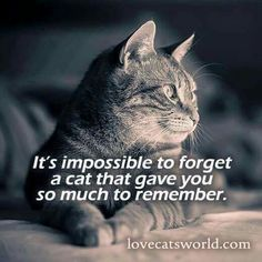 I think of you every day, Allie Cat! You'll always be in my heart.
