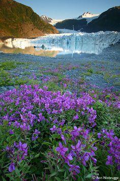 Pedersen Glacier, Aialik Bay, Kenai Fjords National Park, Alaska.