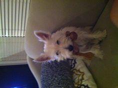 Sid loves his stuffy Love Him, Corgi, Best Friends, Animals, Beat Friends, Animaux, Corgis, Animal, Bestfriends