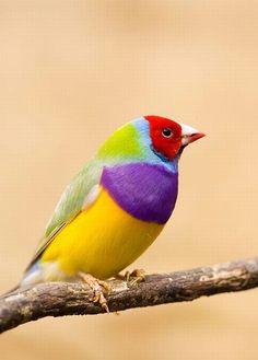 spettacolari e bellissimi uccelli 16
