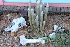 cactus and animal skulls and bones