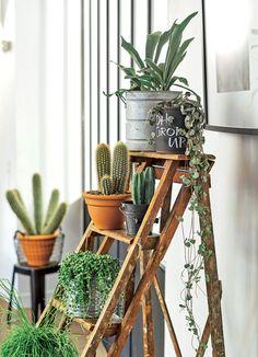 Les #cactus deviennent des éléments de déco !