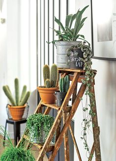 les crassulas des plantes graphiques truffaut plantes d 39 int rieur pinterest pots. Black Bedroom Furniture Sets. Home Design Ideas