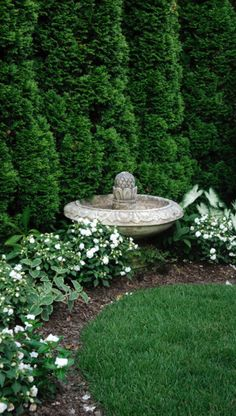 Privacy tress softened with white flowering shrubs.- OHH!! - SO BEAUTIFUL, SO LUSH & GREEN, WITH THE MAGNIFIQUE WHITE FLOWERS 'POPPING' THEIR HEADS OUT, AROUND THE PRETTY BIRD BATH!!