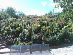 #bush