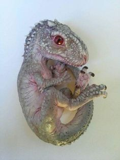 Baby indominous rex