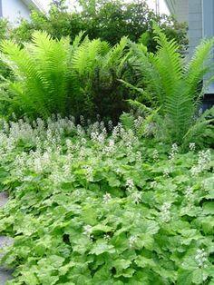 Ferns and Tiarella cordifolia Woodland Plants, Woodland Garden, Shade Tolerant Plants, Shade Plants, Backyard Planters, Garden Landscaping, Bog Plants, Garden Plants, Landscape Design