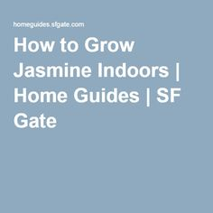 How to Grow Jasmine Indoors | Home Guides | SF Gate