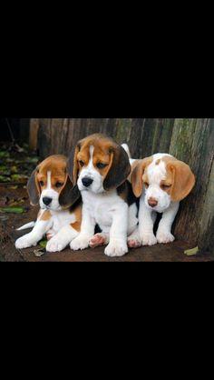Puppy's