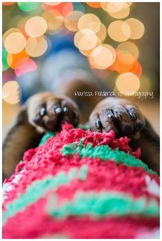 Dachshund paws. #dachshund