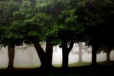 Fog + Trees = Perfect Place To Be, via Flickr.