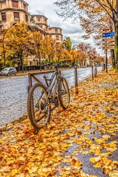 Late autumn fall of the leaves Paris by Valerii Tkachenko