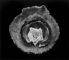 Paul Caponigro, Rose Bowl, Cushing, Maine, 2003