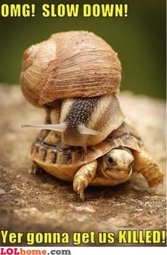 """""""Back-shell driver!"""""""