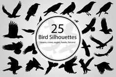 25 Vector Silhouettes of various crows, ravens, eagles, hawks, and falcons. Pattern Illustration, Pencil Illustration, Graphic Illustration, Vector Illustrations, Silhouette Clip Art, Business Illustration, Creative Sketches, Paint Markers, Business Card Logo
