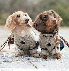ready 4 the fall at the beach divas at the beach looking fab u go doxies