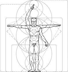 body proportion, anatomy