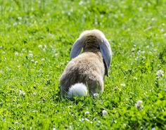 Funny bunny tail - beautiful animal playing in the grass. Animal Wallpapers. HD Wallpaper Download for iPad and iPhone Widescreen 2160p UHD 4K HD 16:9 16:10