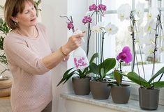 Flowers, Plants, Decor, Garden Ideas, Decoration, Plant, Landscaping Ideas, Decorating, Backyard Ideas