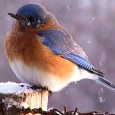 Bluebird on post