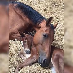 """This mare lost her little foal. Two days later, this foal lost its mother. Here they are an hour after meeting.."" Fascinating Pictures (@Fascinatingpics) 